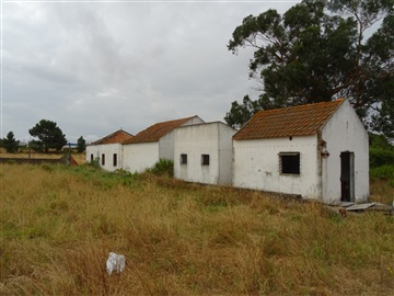 Farm / Palmela, Quinta do Anjo