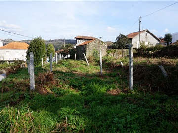 Plot / Barcelos, Palme